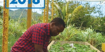 man in red checked shirt tending to plants grown at an aquponics agri-business