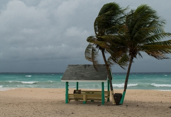 Two tress on a beach blowing in the wind, with an empty bench, under overcast skies